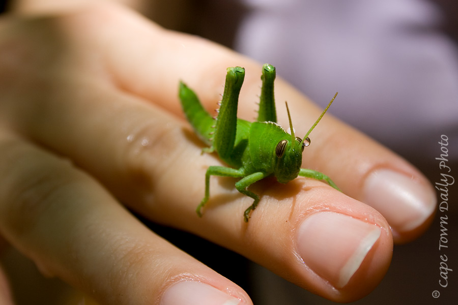 Ludwig the Grasshopper