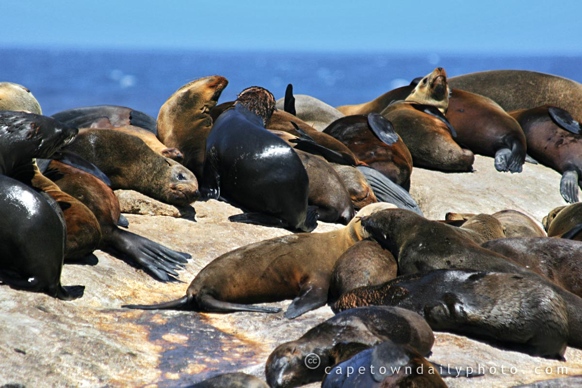 Hout Bay's Seal Island