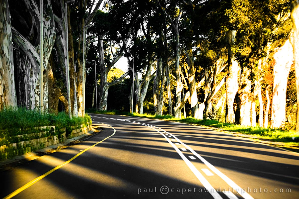 Roads and Trees