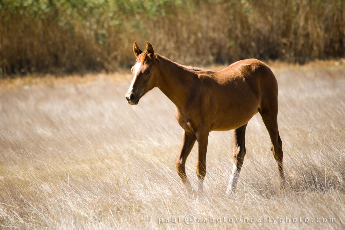 A not-so-big brown horse
