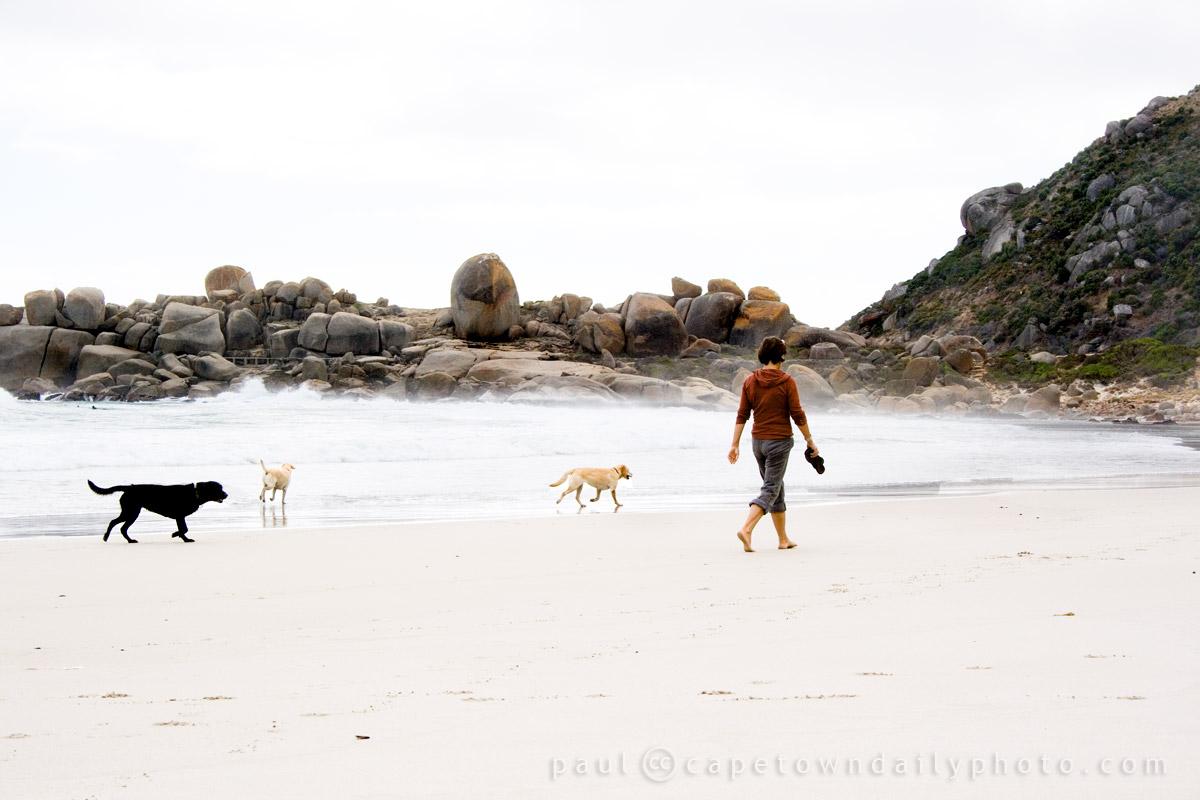 Are Dogs Allowed On Llandudno Beach