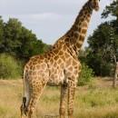 Into Kruger National Park