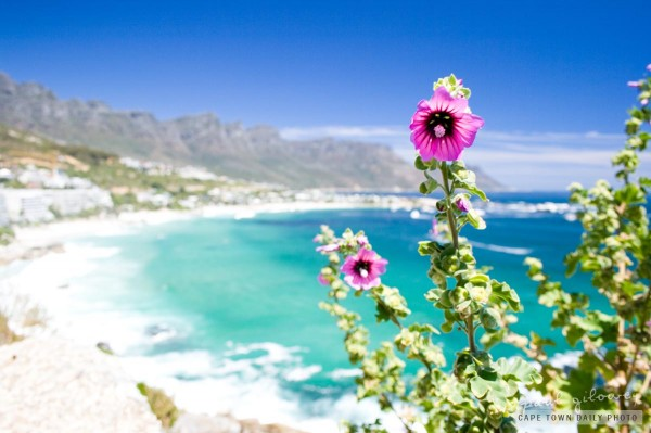 Blue skies and purple flowers