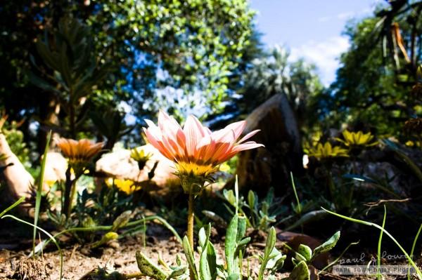 Flowers follow the sun