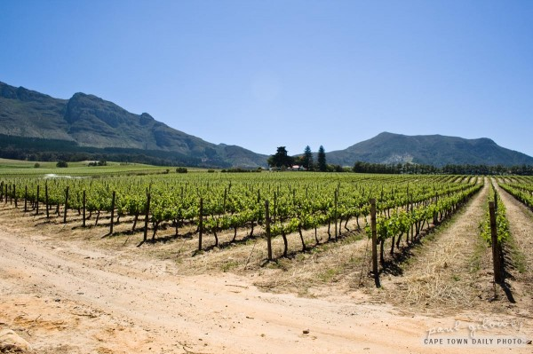Vineyards of Constantia