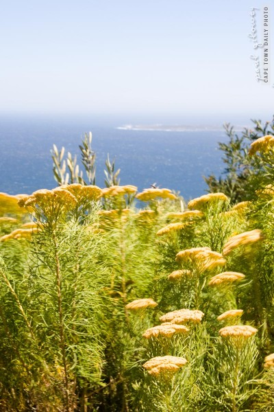 Flowers, sea, island