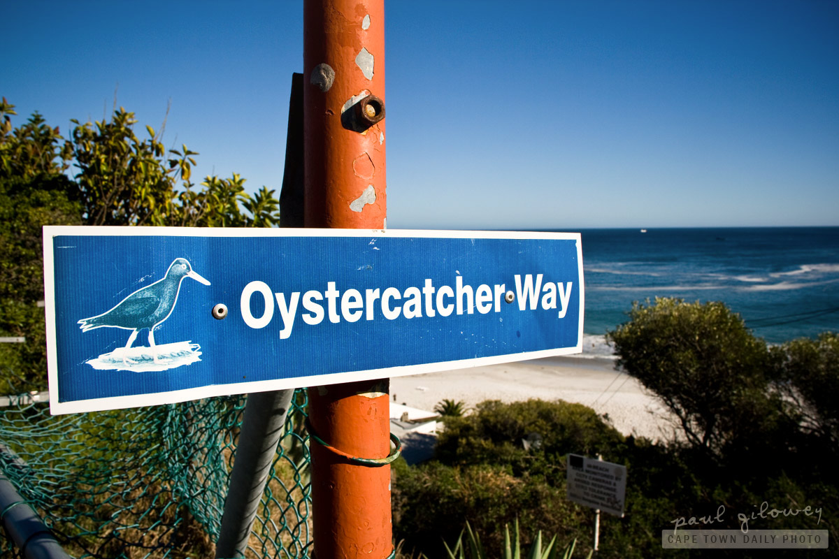 Oystercatcher Way