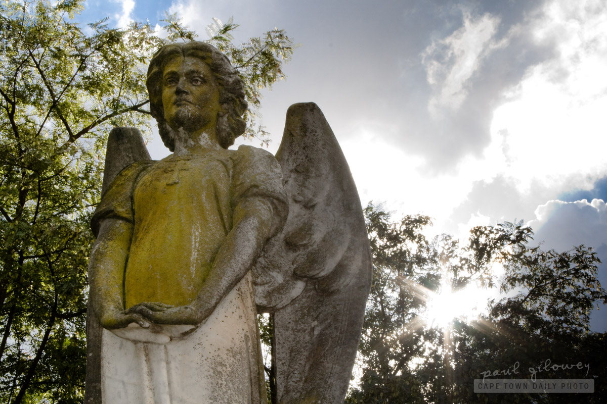 Angel at Stellenbosch cemetery