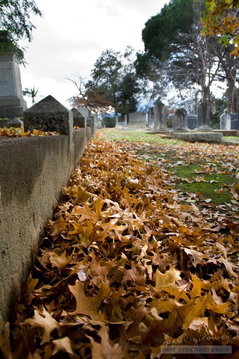 Autumn leaves at the cemetery
