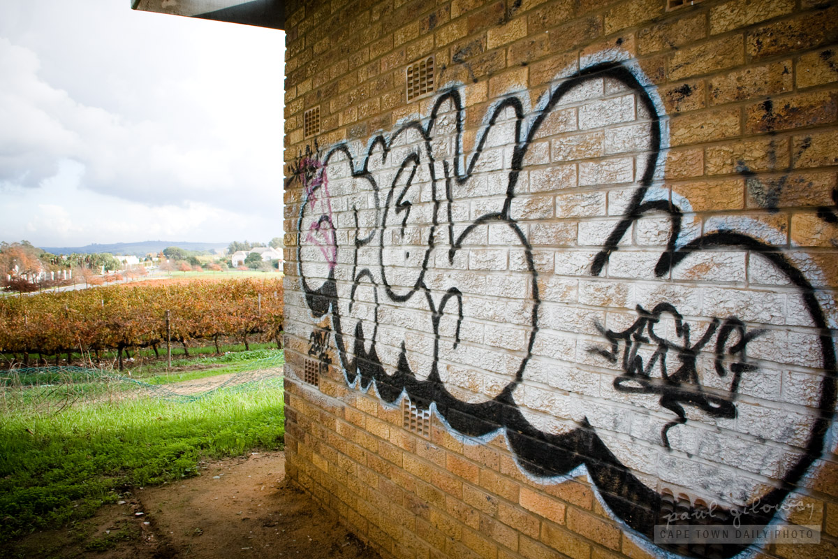 Graffiti and vines