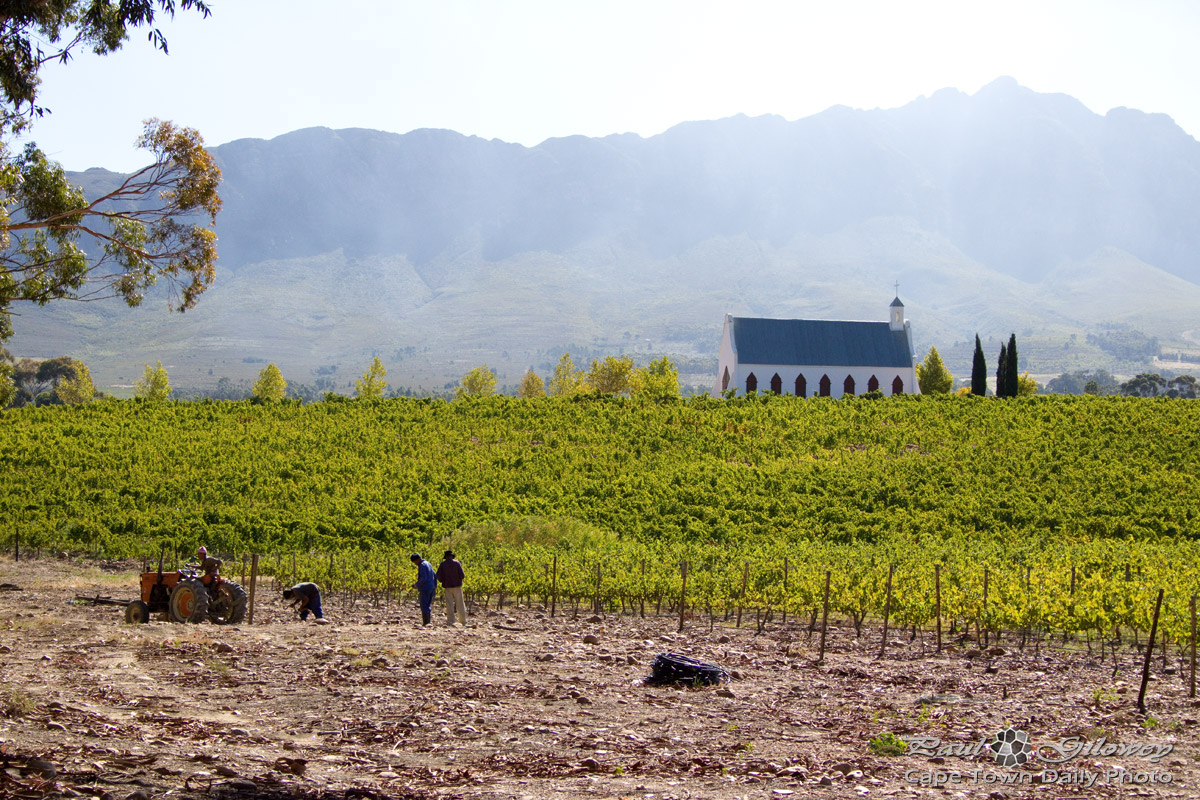 Church among the vines