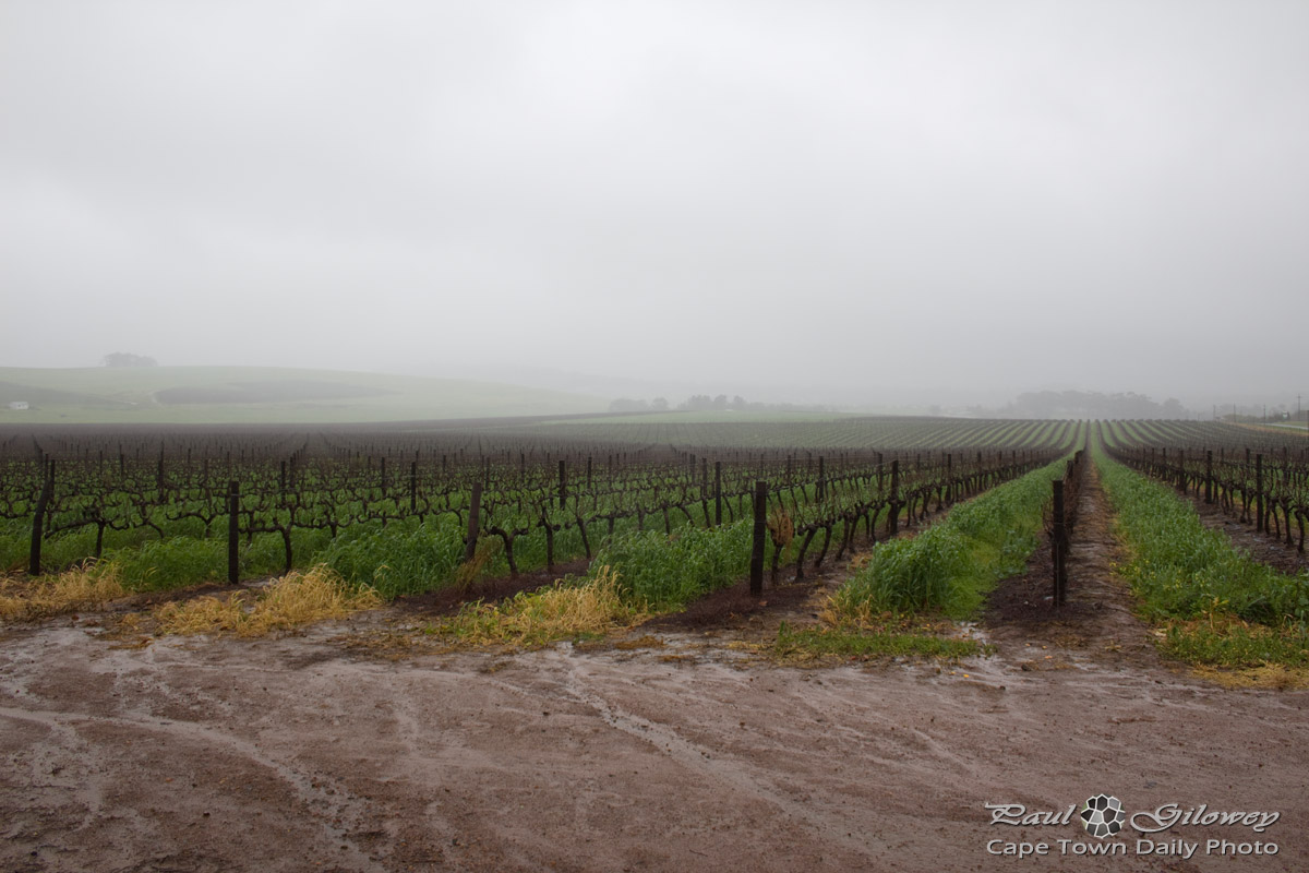 Wet 'n soggy vineyards