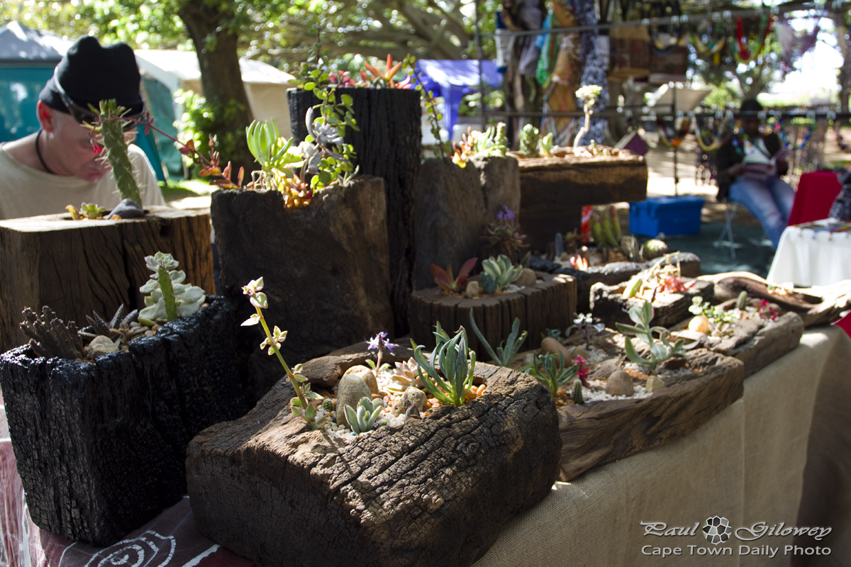 Craft markets and cacti