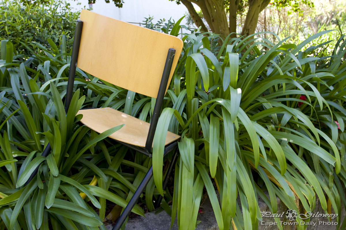 An unusual spot for a garden chair