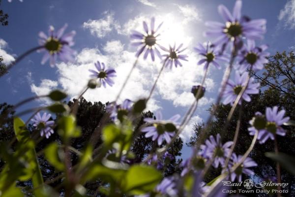 Purple flowers above