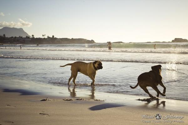 Doggies on the beach