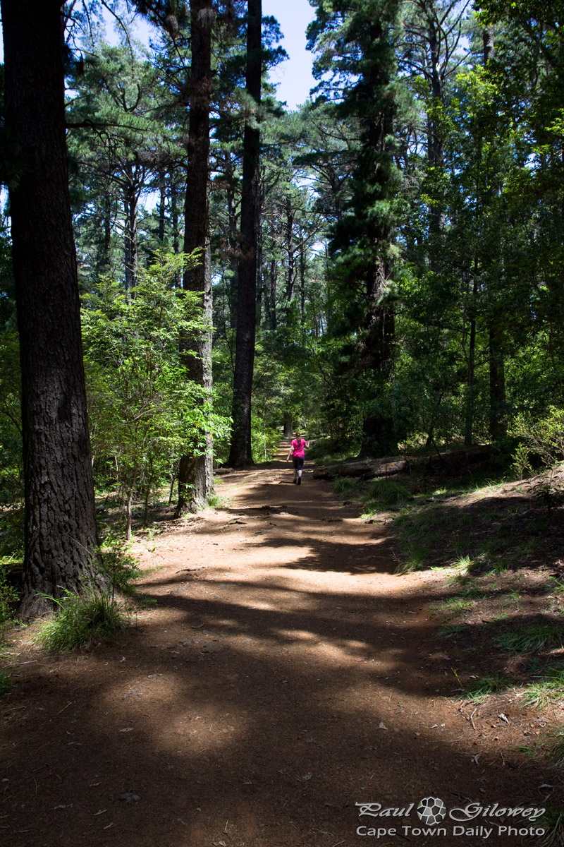 Into Newlands Forest