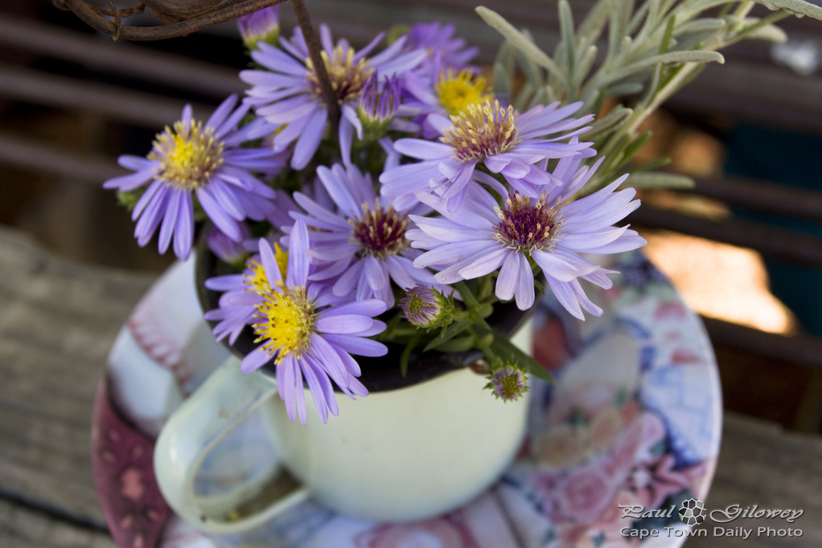 A teacup flower arrangement