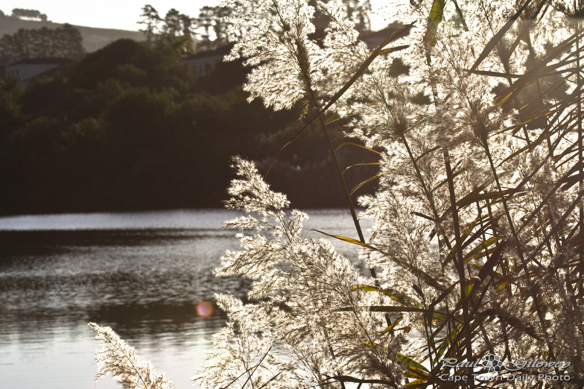 Reedlike plants and sunlight