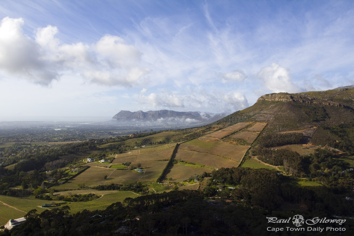 Constantia's vineyards