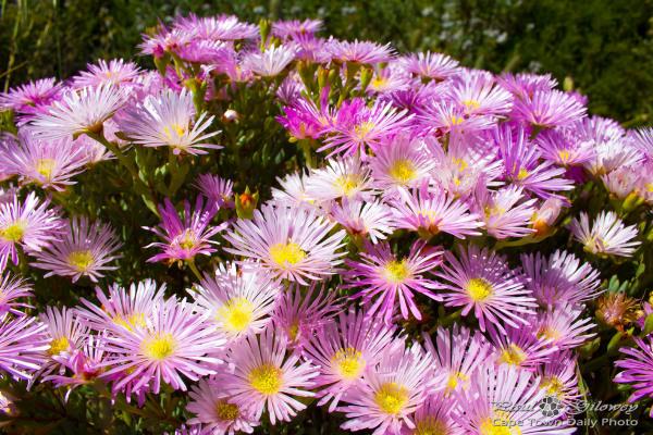 Bitty pink flora