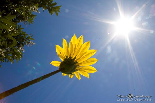 Sunspot yellow