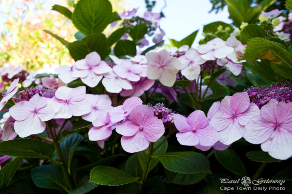 Four pink petals