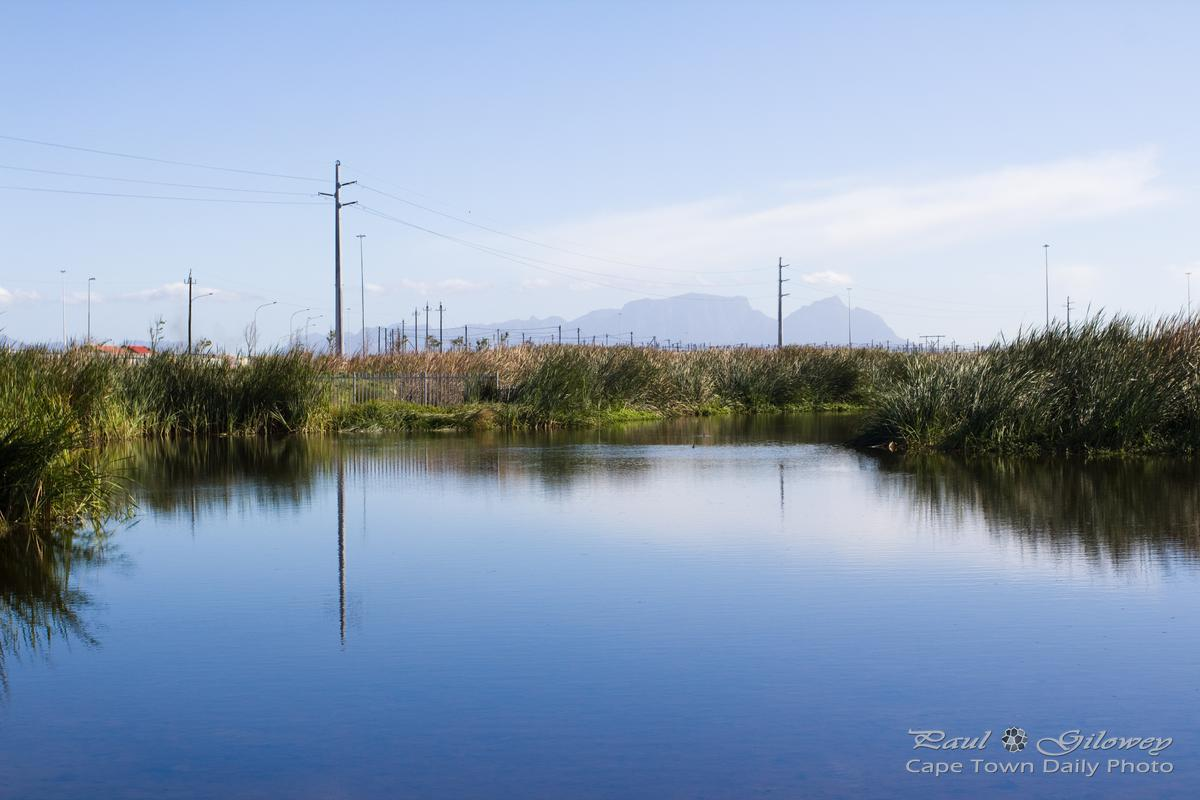 Beauty of the Khayelitsha Wetlands Park